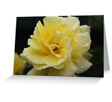 A rain soaked Gold Bunny Rose in full bloom Greeting Card