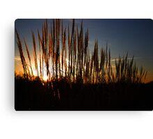Tall Grass Canvas Print