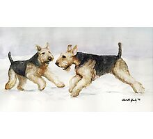 Tis the Season to be Jolly Airedale Watercolor Painting Photographic Print
