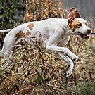 Fetch and Jump! by Alicia Adamopoulos