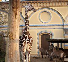 Smug Giraffe by Cvail73
