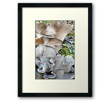 Unrequited Splendor Framed Print