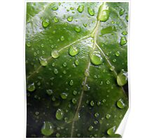 Waterdroplets on green leaf Poster