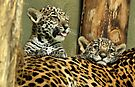 Two Baby Jaguars by Sandy Keeton