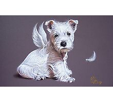 Westie angel Photographic Print
