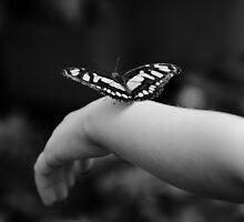 Fly away by Edward Myers