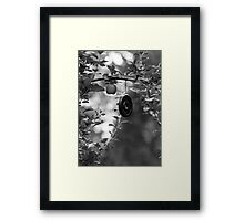 Apple and Weight Tree Framed Print