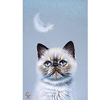 Kitten  and feather Photographic Print