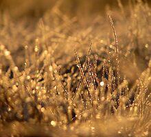 16.12.2009: Winter Diamond by Petri Volanen