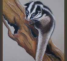 Australia/Papua New Guinea Striped Possum by Louise Page