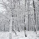 Our 2nd Snowfall by Pam Moore