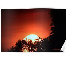 Sunset Thru The Trees Poster