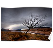 Loch Tulla Windswept Nature Poster