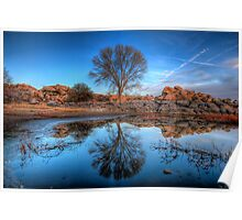 Rock Wall Tree Reflect Poster