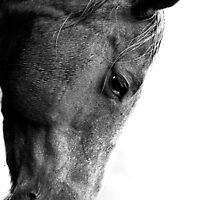 Horse ..hi key by Caroline Gorka
