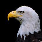 EAGLE HEAD by Rodney55