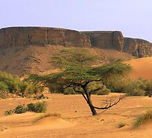 an exciting Somalia landscape by beautifulscenes
