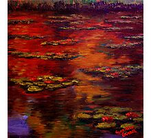 Red Lily Pond Photographic Print