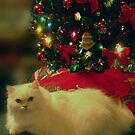 A CATS CHRISTMAS by trisha22