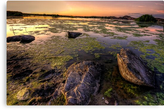 Algae vs Rocks by Bob Larson