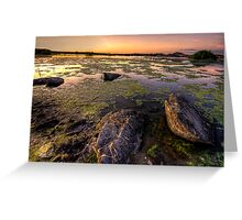 Algae vs Rocks Greeting Card
