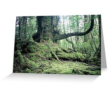 Ancient Myrtle, Forest of the Giants, the Tarkine. Greeting Card
