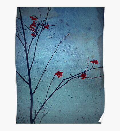 Red Berries, Blue Sky Poster
