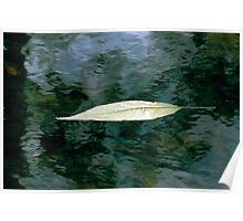 Leaf in Stream - NSW Poster