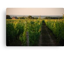 Through the Vineyards Canvas Print