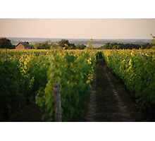 Through the Vineyards Photographic Print