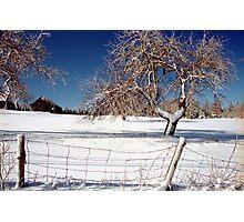 Winter on the Farm Photographic Print