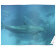 Dolphins at Fonomu Island, Truk Lagoon Poster