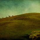 These Hills by kirsten116
