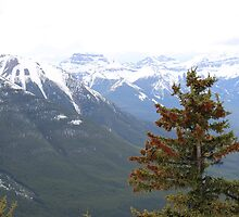 Rocky Mountains, Banff Canada by Alison Murphy