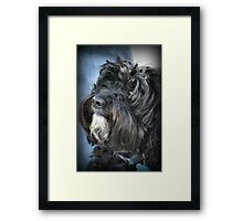 Cockapoo Framed Print