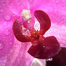 Macro Flower - Shot 2 by Danny  Thrussell