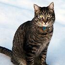 Jasper in the Snow by Jan  Tribe