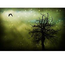 Nightbird Photographic Print