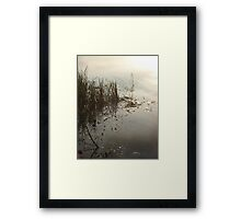Reeds on Econfina Framed Print