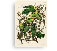 Carolina Parrot Audubon Birds of America Canvas Print