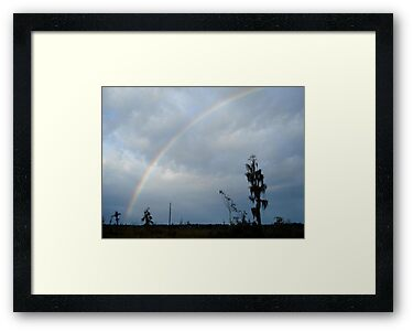 Rainbow over Econfina Creek 12/09 by May Lattanzio