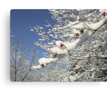 Dogwood Berries In The Snow Canvas Print
