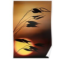 sunset silhoutte  Poster