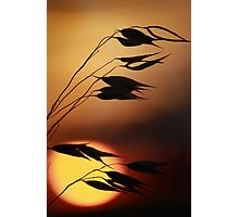 sunset silhoutte  Photographic Print