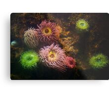 A Sea of Colors - Colorful Soft Coral Metal Print
