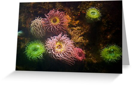 A Sea of Colors - Colorful Soft Coral by dmvphotos