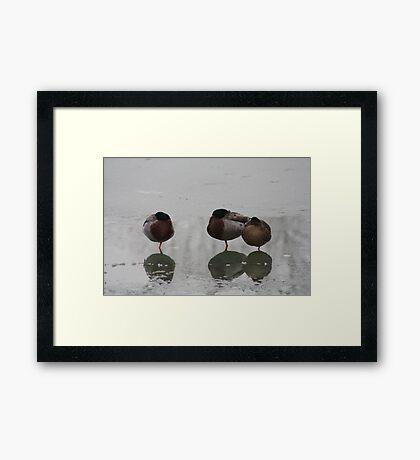 Sleeping on ice Framed Print