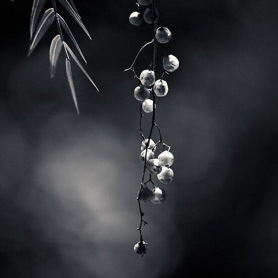 Quiet Suspension by Christine  Wilson Photography