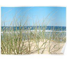 Sand grass at Sunshine Beach Poster