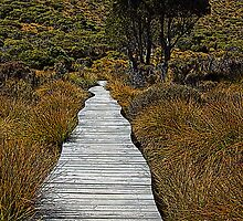 Boardwalk Through the Button Grass - Cradle Mountain National Park, Tasmania by Ruth Durose
